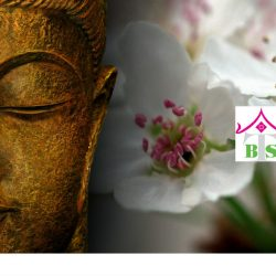Buddha bts